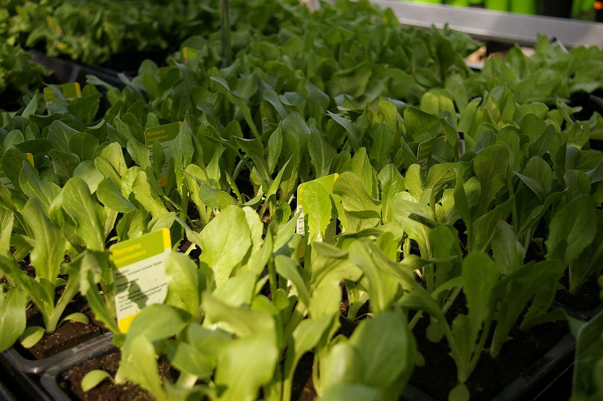 Kräuter und Gemüsepflanzen